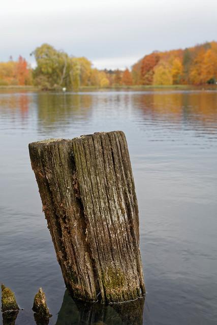 En bord d'étang