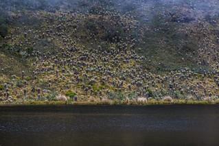 Laguna Iguaque