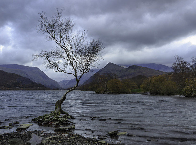 Another One of That Lone Tree!