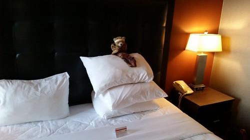 Kuma Bear is the Pillow King