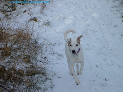 archie-in-the-snow_8436160910_o