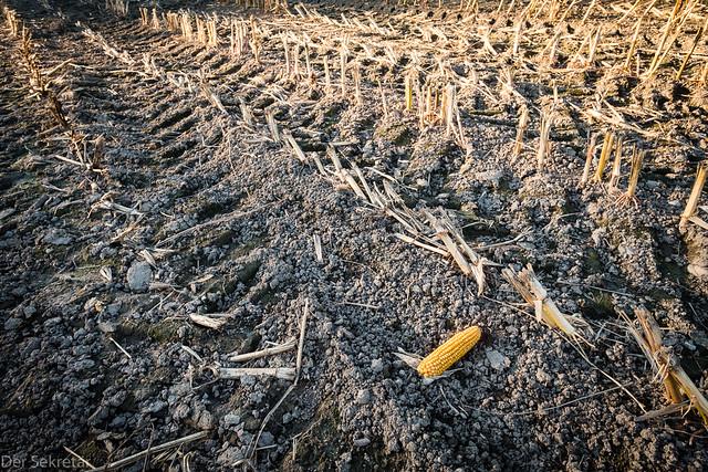 Nach der Ernte (After the harvest)
