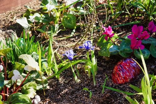 2019-01-25 - Nature Photography - Flowers - Iris