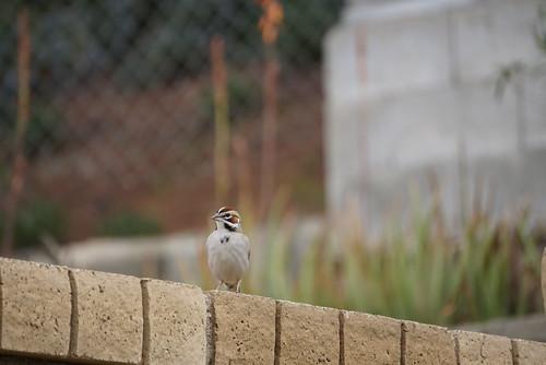 Bird Watching2/1/19