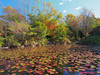 Photo:Fall colors at Yayoinomori By Greg Peterson in Japan