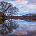 Just Another Tree Reflection by Stefan Nikoloff