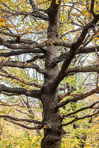 autumn tree forest poltava ukraine travel nature
