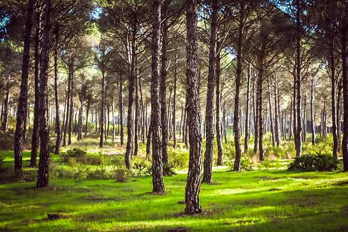 Bosque de Cartaya