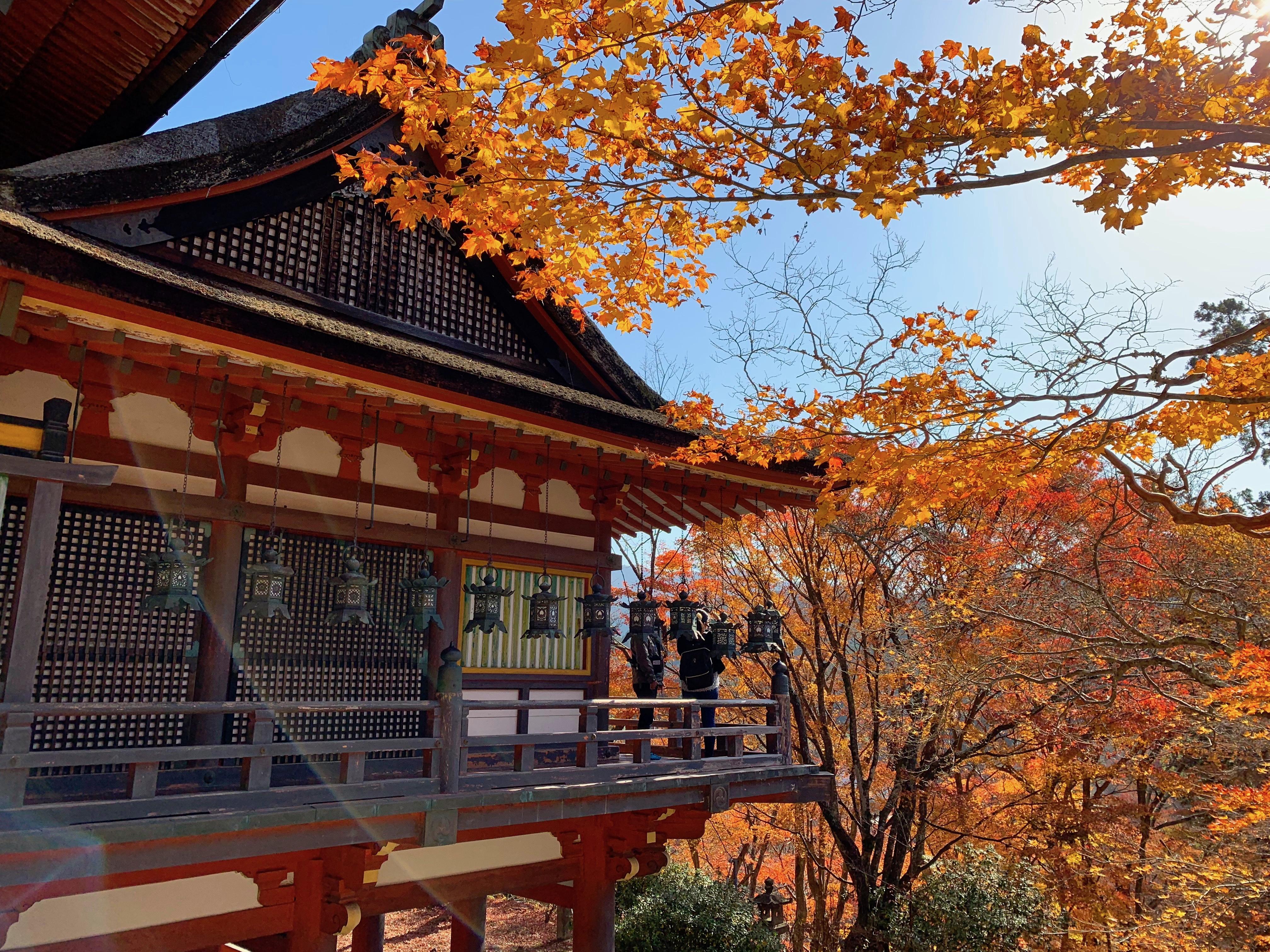 Nara, Japan 2018 247
