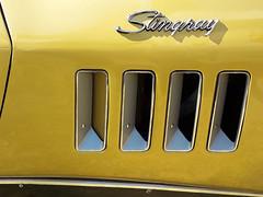 Stingray_vg