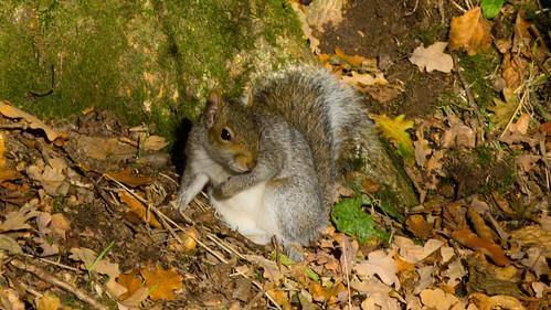 Squirrel looking round