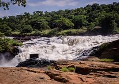 2018 Uganda,Murchinson Falls