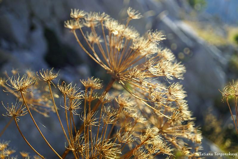 Сухие травы