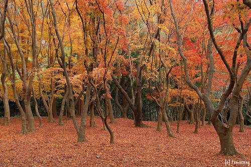 Autumn Color at Kouzanen Garden 2018