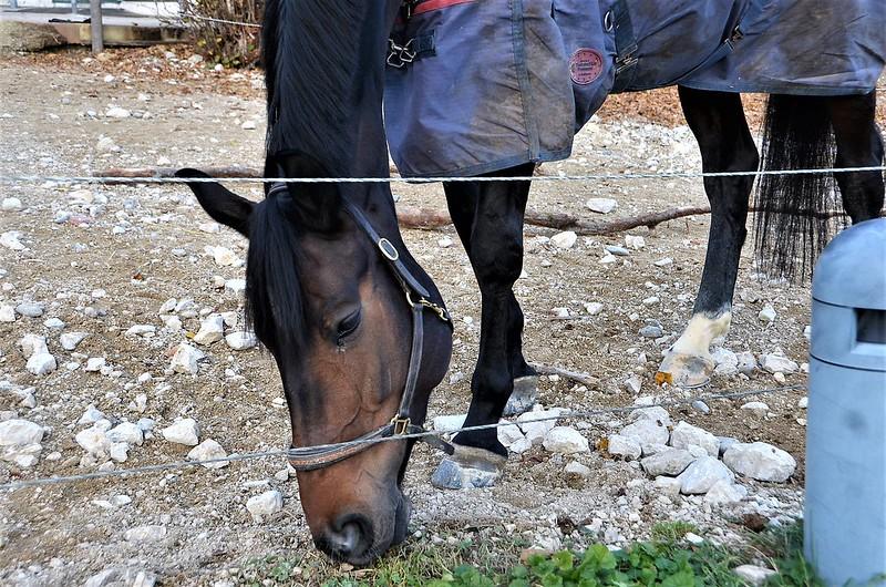 Horses 20.11 (3)