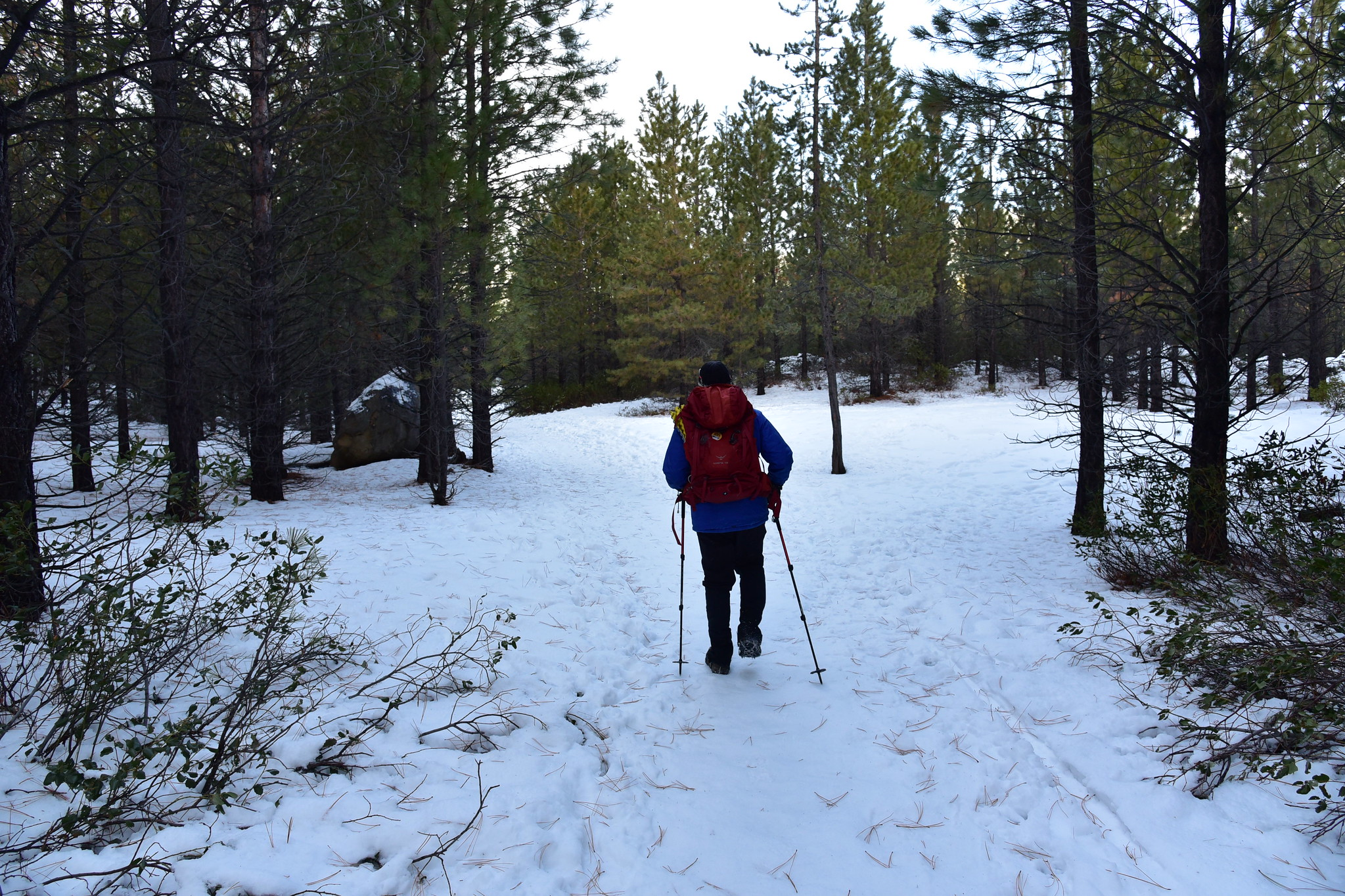 Tumalo Creek Trail