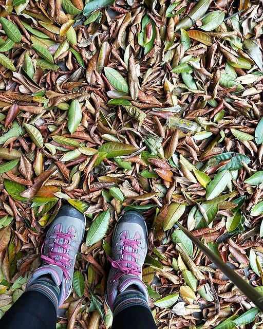 20181209 這個季節走走郊山步道 好舒服 #山之道 #一起更健康 #有運動沒在怕的 #40歲以後找回自己 #山女孩