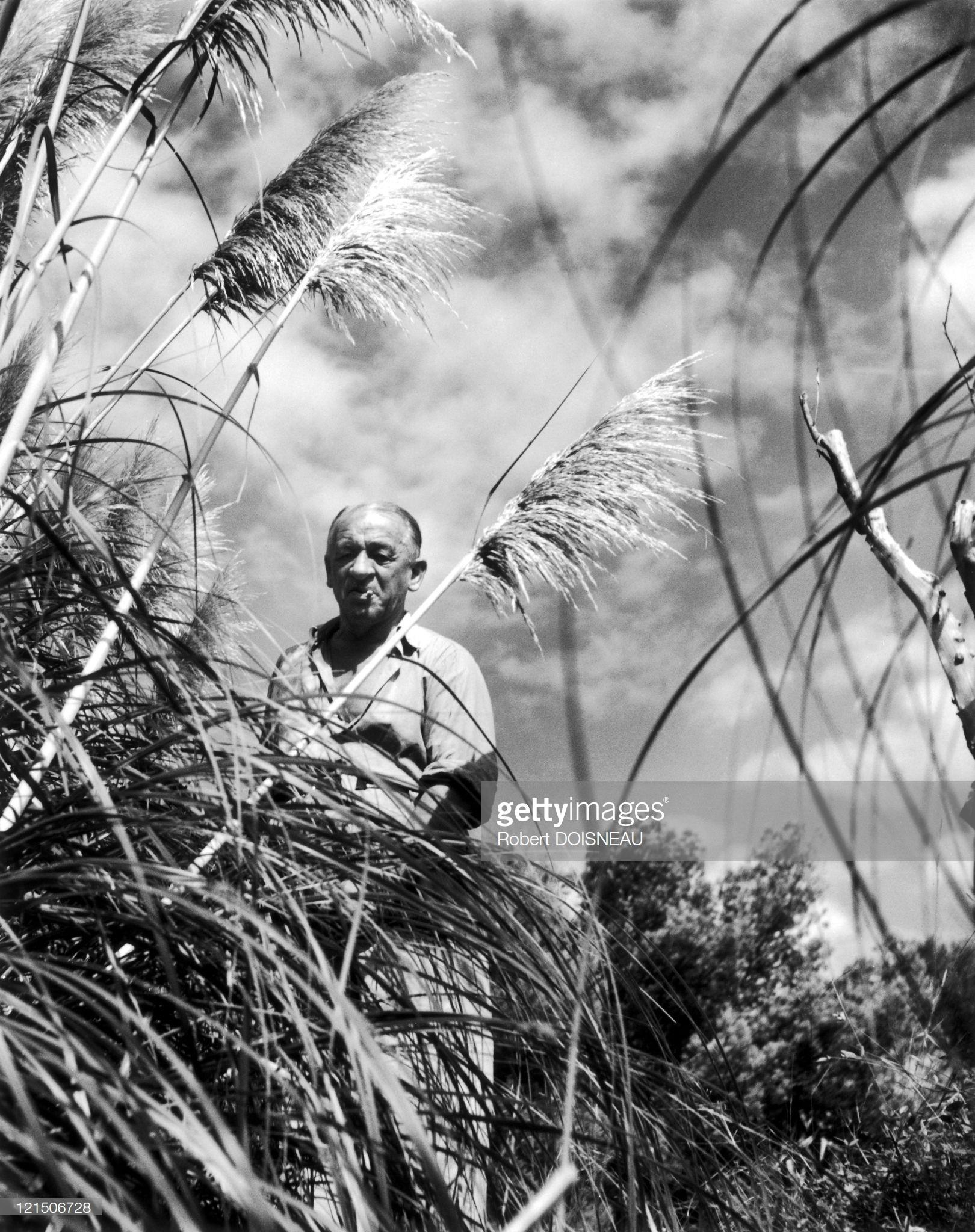 1948. Трава пампы. Вильфранш