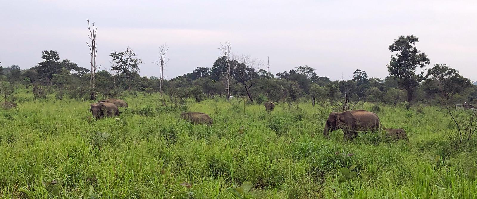 VER ELEFANTES SALVAJES EN SRI LANKA ver elefantes salvajes en sri lanka - 32032813527 ad08267410 h - Ver elefantes salvajes en Sri Lanka