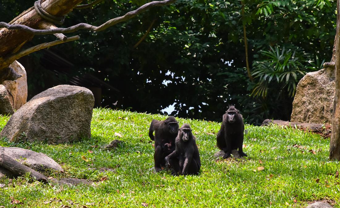 Singapore-zoo-(42)