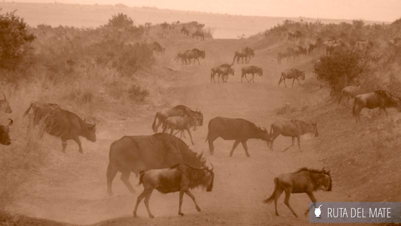 Guia para viajar a Kenia y Tanzania P1100744