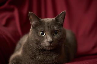 Roxy (19/365)