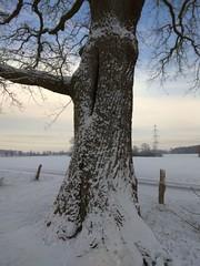 31. Januar 2019 - 10:01 - Winterspaziergang in Roxel am 31. Januar 2019.