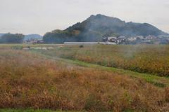 Smoke over soybean fields