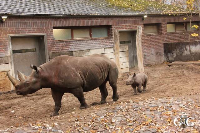 Besuch Zoo Berlin 11.11.201863