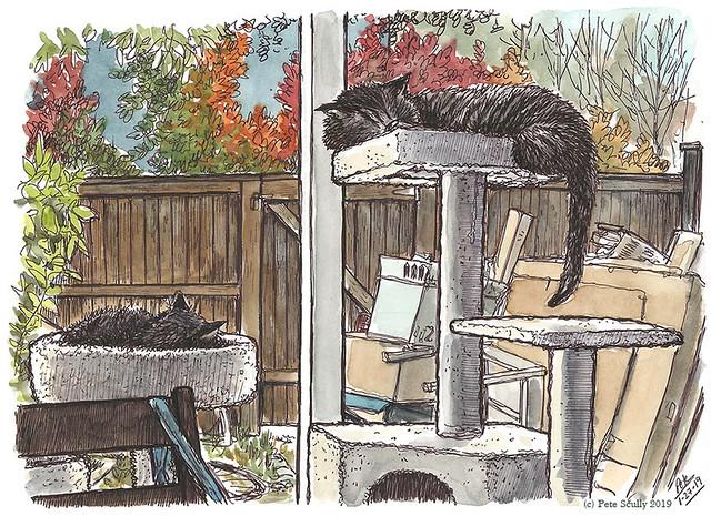 cats on sunday