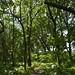 Notton Wood Nature Reserve (168)