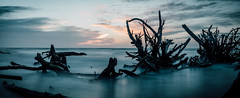 Blurred Tide