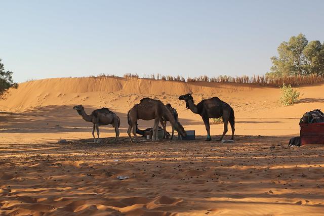 2014 05 25 - 06 19 marokko 08