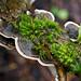 343/365 moss & mushrooms by embem30