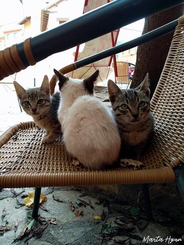 Three little cuties