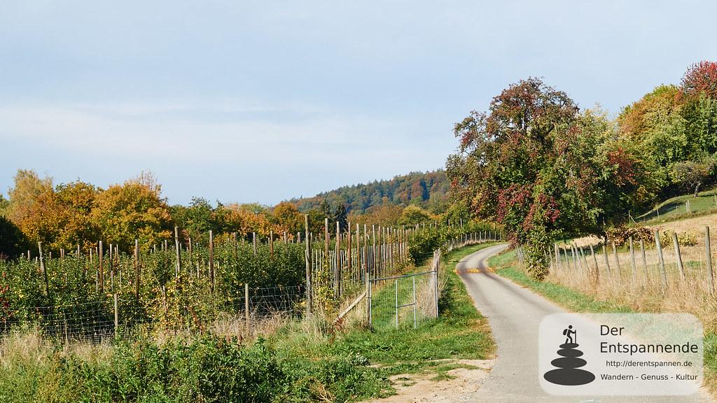 Obstfelder obehalb von Ludwigshafen