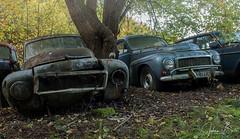 The Volvo's.
