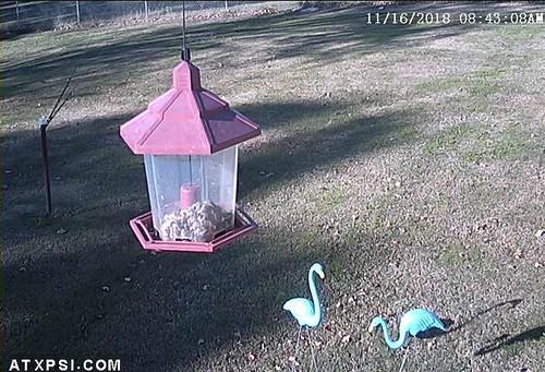 Bird Cam Alarm Message