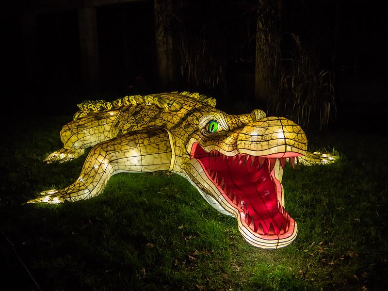 Espèces en voie d'illumination : Le crocodile et le boa 31295486867_6d73f0547c_c