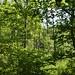 Notton Wood Nature Reserve (125)