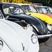 Ross Clan VW's