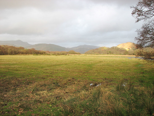 Field by Mawddach trail