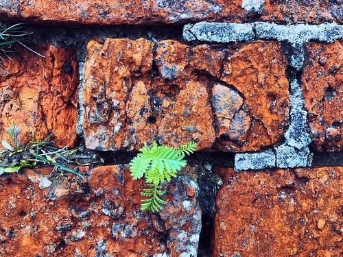 wallplant