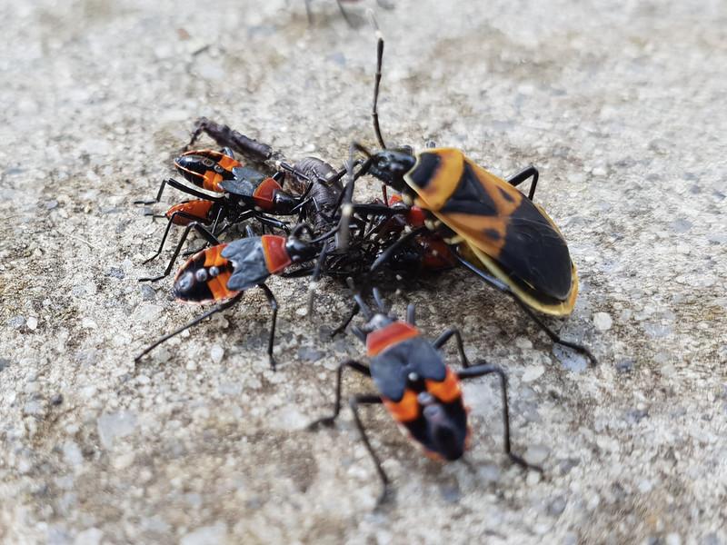 Bugs In Suburbia