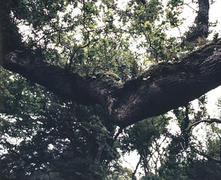 Branch, Courtmacsherry