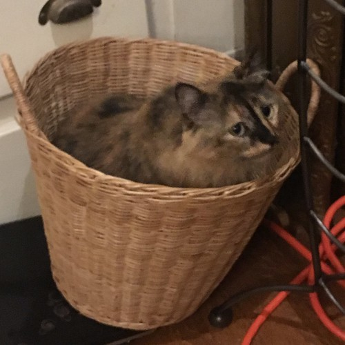Basket of floof