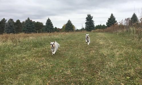 2018-307 - Dog Park