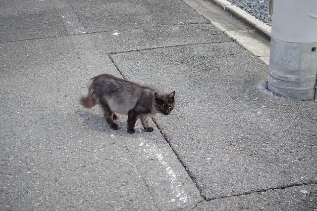 Today's Cat@2018-11-11