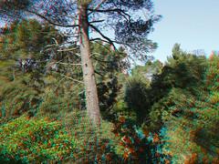 Wald_3D