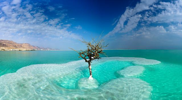 The Tree (DSC01620-Pano), Sony ILCE-7RM2, Sony FE 16-35mm F4 ZA OSS